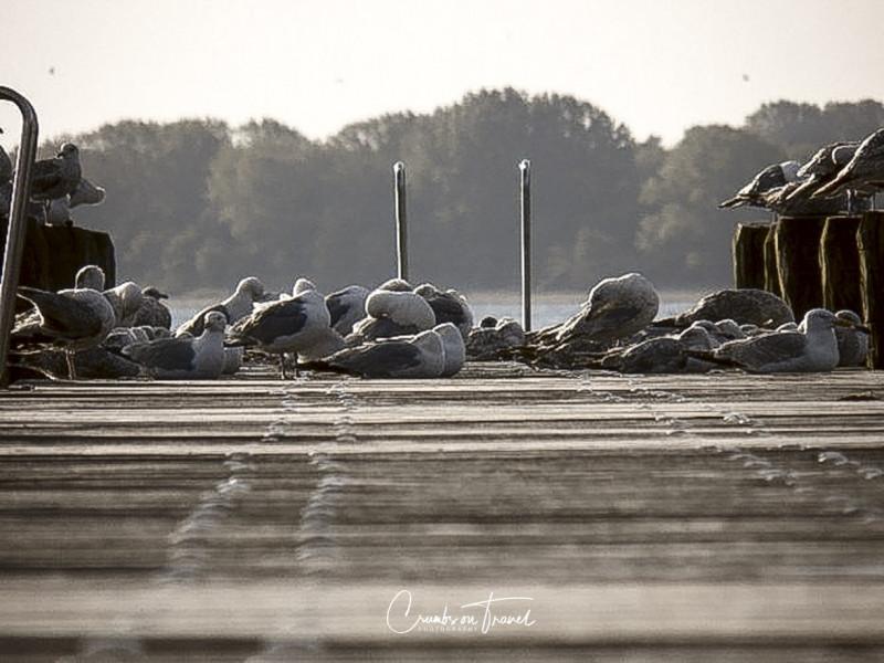 Seagulls on the beach bridge in Travemünde