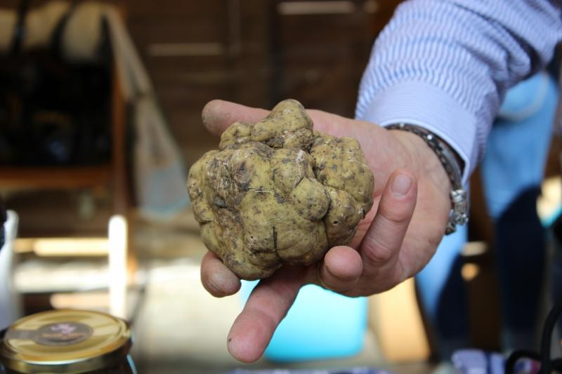 Truffle, truffle festival Sant'Angelo in Vado, Le Marche, Italy