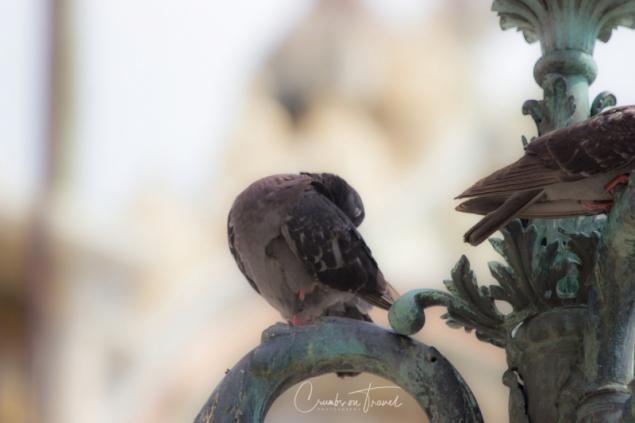 Piazza San Marco, Venice/Italy