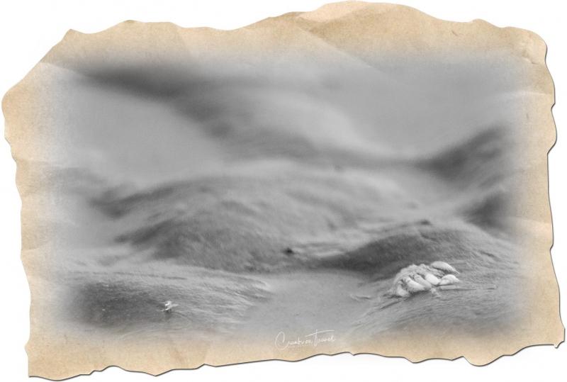 Crab - Watt Impressions