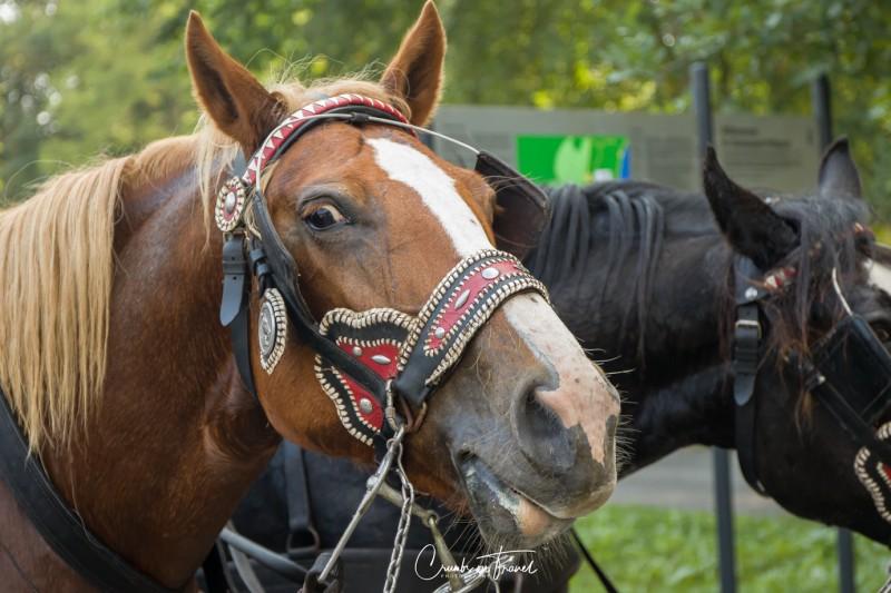 Horses at Castle Wiligrad